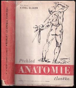 Přehled anatomie člověka